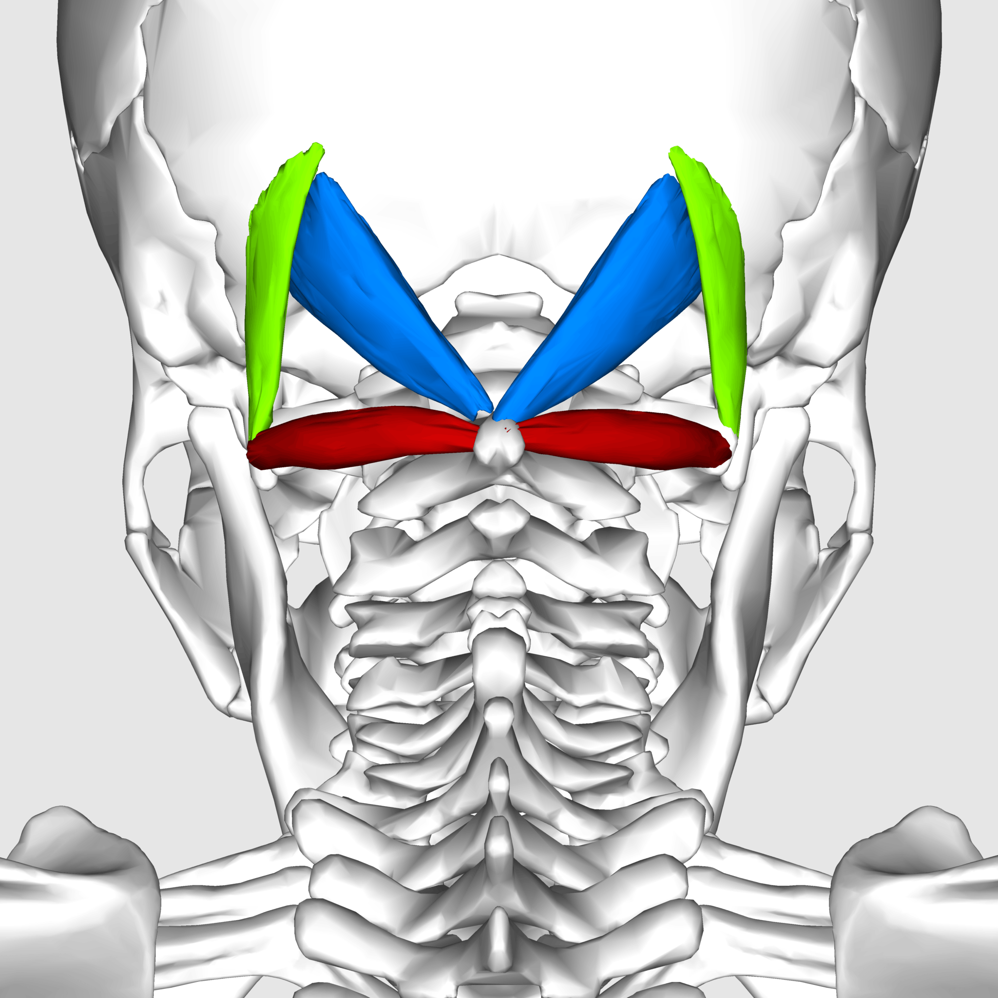 Migraine headaches treatment | Suboccipital Muscles